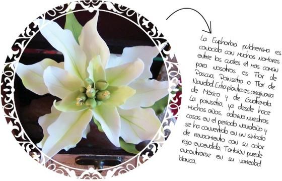 Poinsetia Blanca